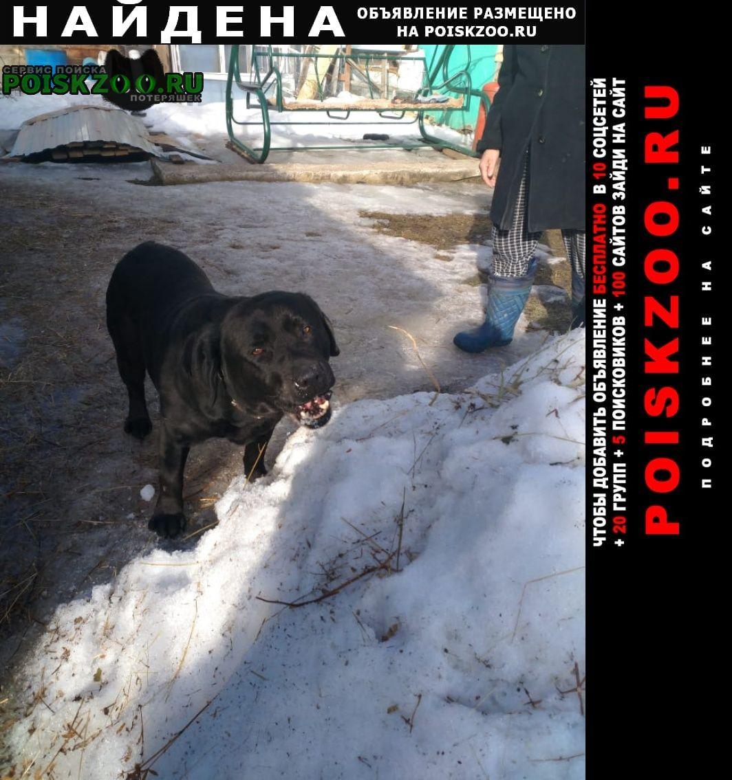 Найдена собака кобель Юрьев-Польский