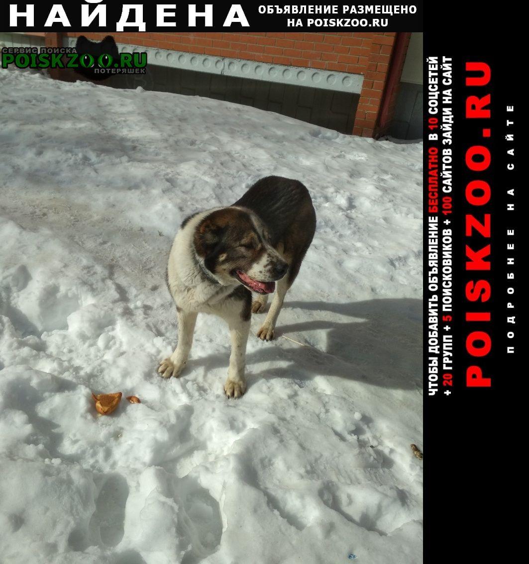 Найдена собака Югорск