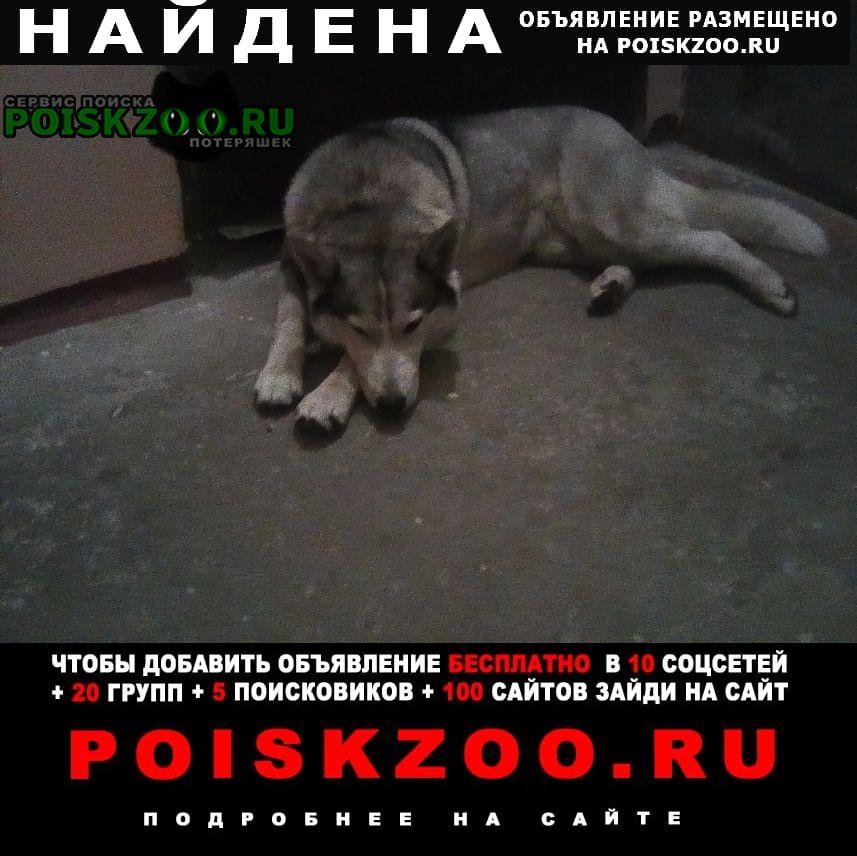 Найдена собака хаски Краснодар