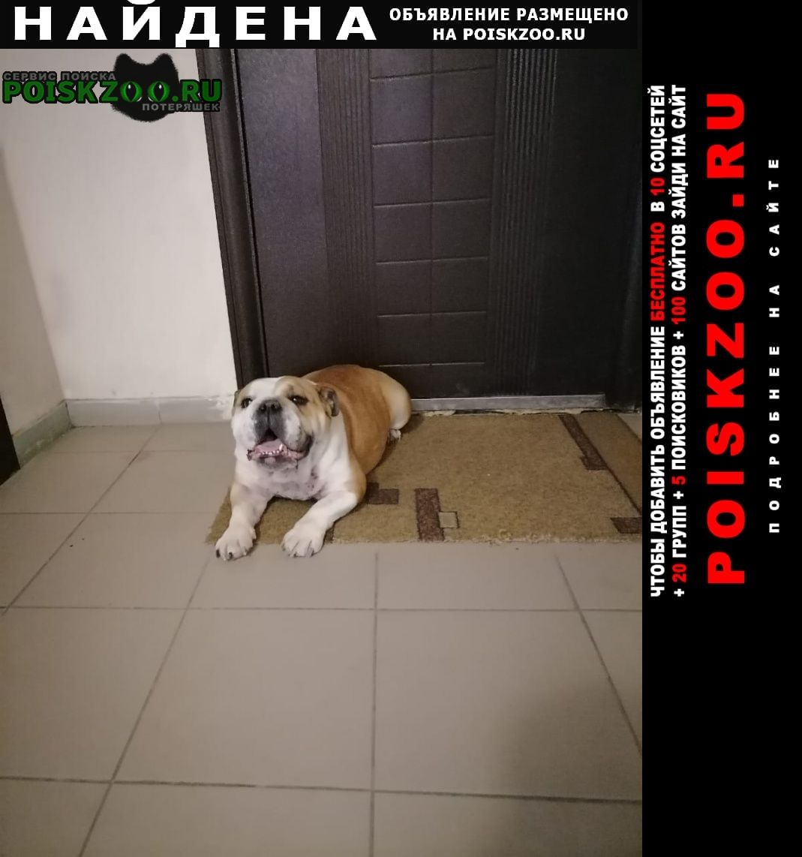 Найдена собака Ессентуки