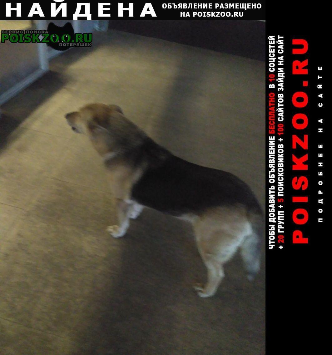 Найдена собака кобель ст.м.волковская бегает песик Санкт-Петербург