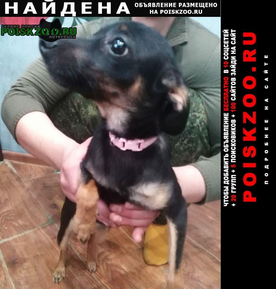 Найдена собака в военном городке Астрахань
