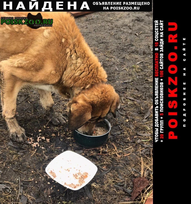 Найдена собака кобель Орехово-Зуево