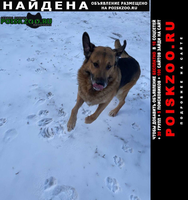 Найдена собака кобель в добрые руки Белгород