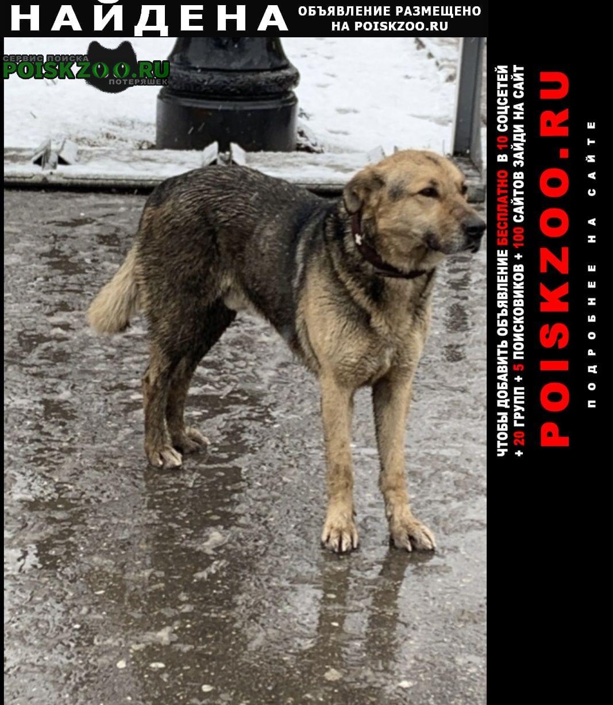 Найдена собака кобель пёс в коричневом ошейнике ждёт ок Москва