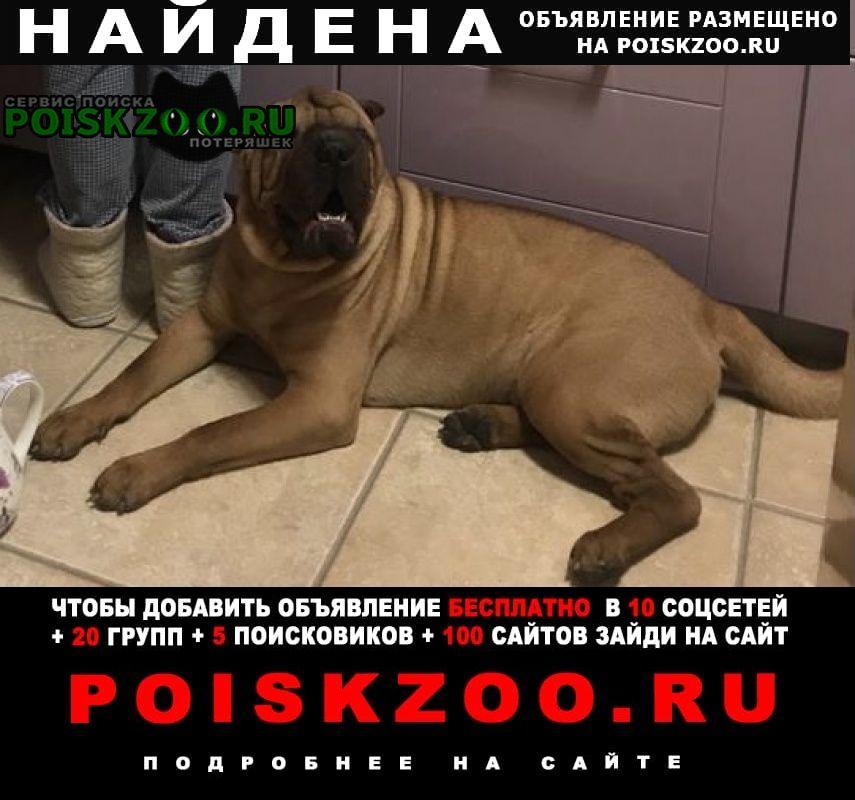 Найдена собака кобель свао, шарпей Москва