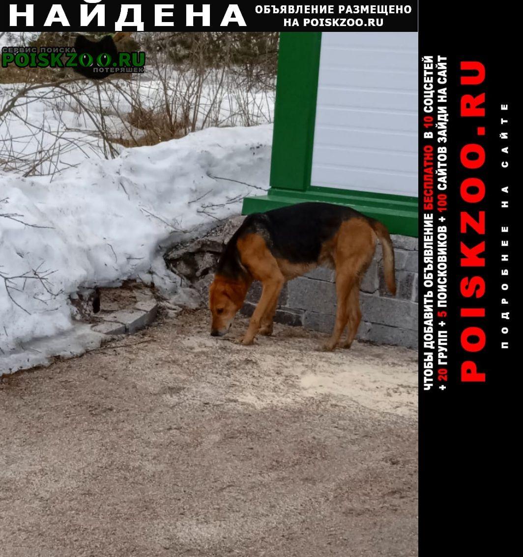 Найдена собака кобель метис охотничья Лахденпохья