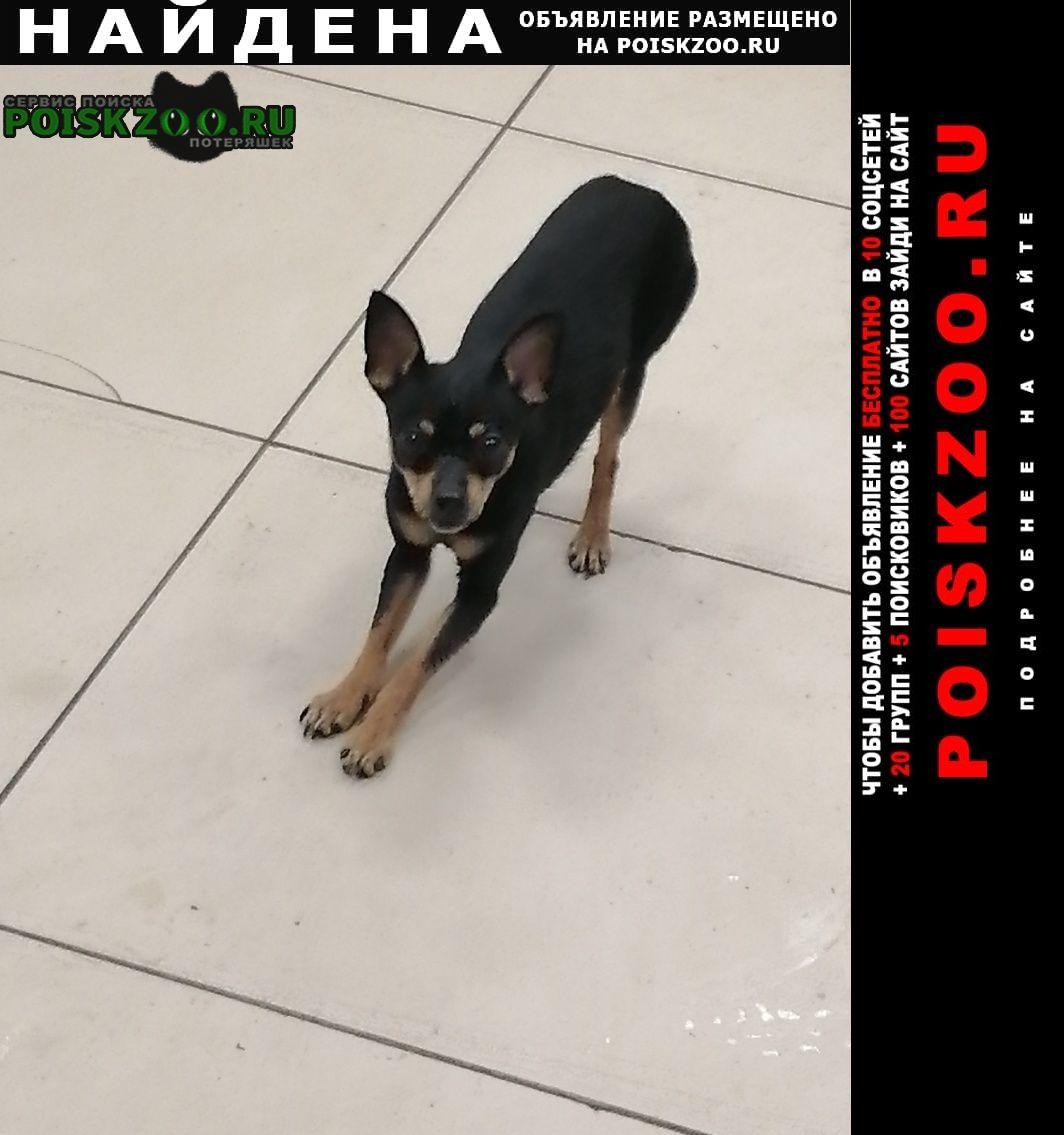Найдена собака кобель улица гастелло Адлер