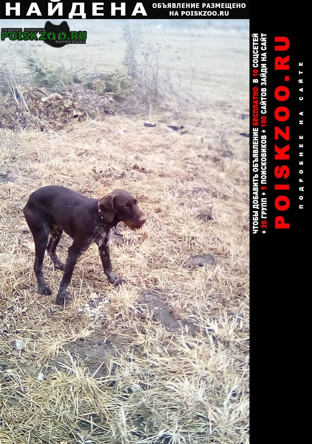 Найдена собака кобель найдитесь хозяин. Новомосковск
