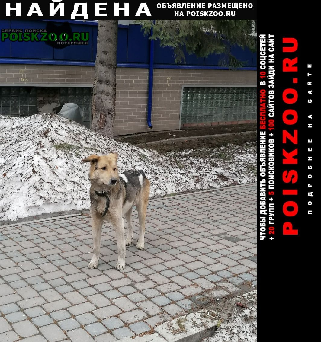 Найдена собака кобель заводское шоссе 11 Самара