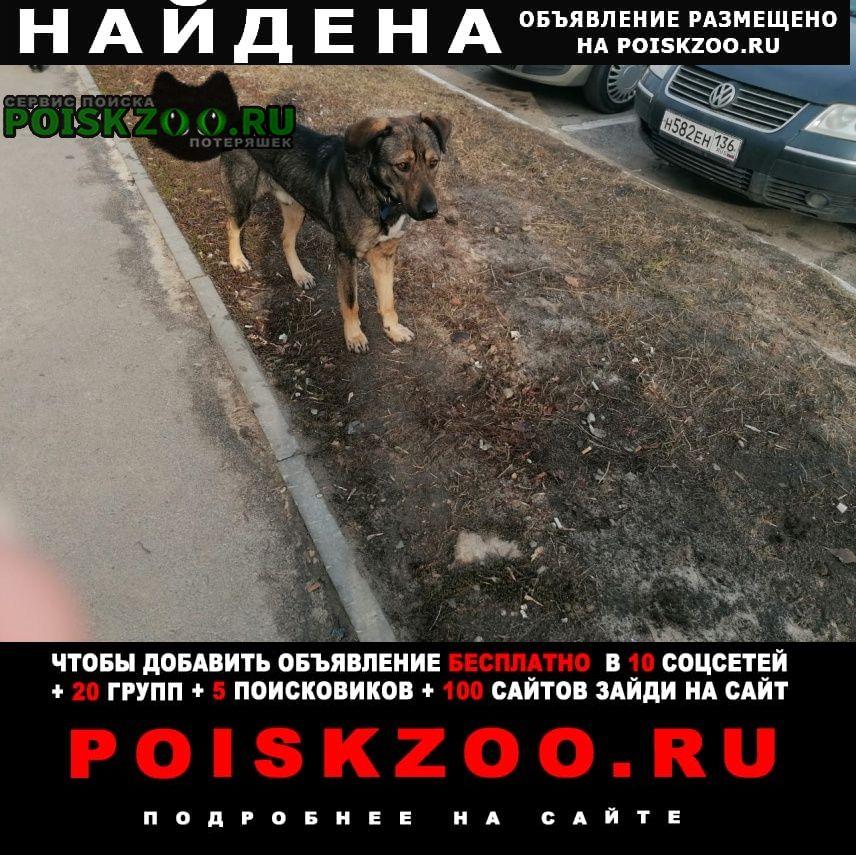 Найдена собака кобель. коминтерновский район Воронеж