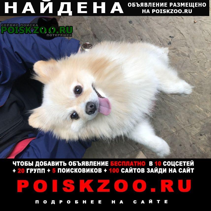 Найдена собака кобель село хрущево Тула