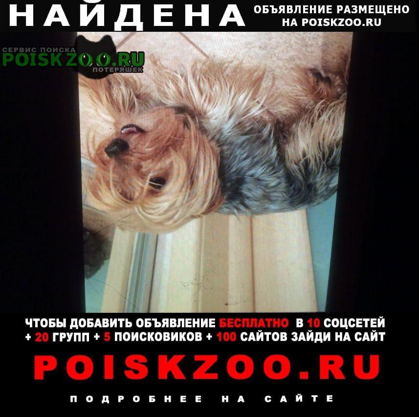 Найдена собака кобель йорк Рязань