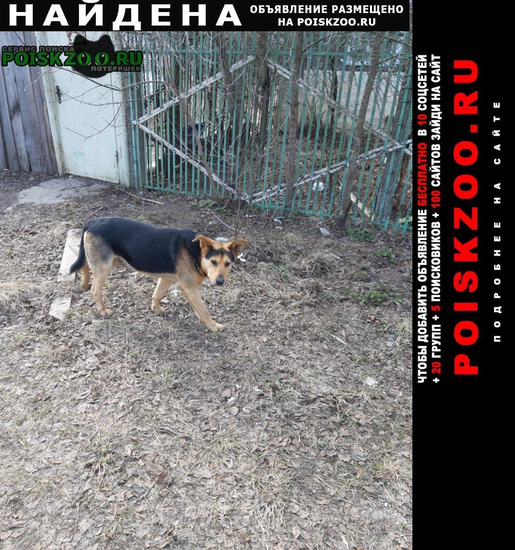 Найдена собака кобель Тверь