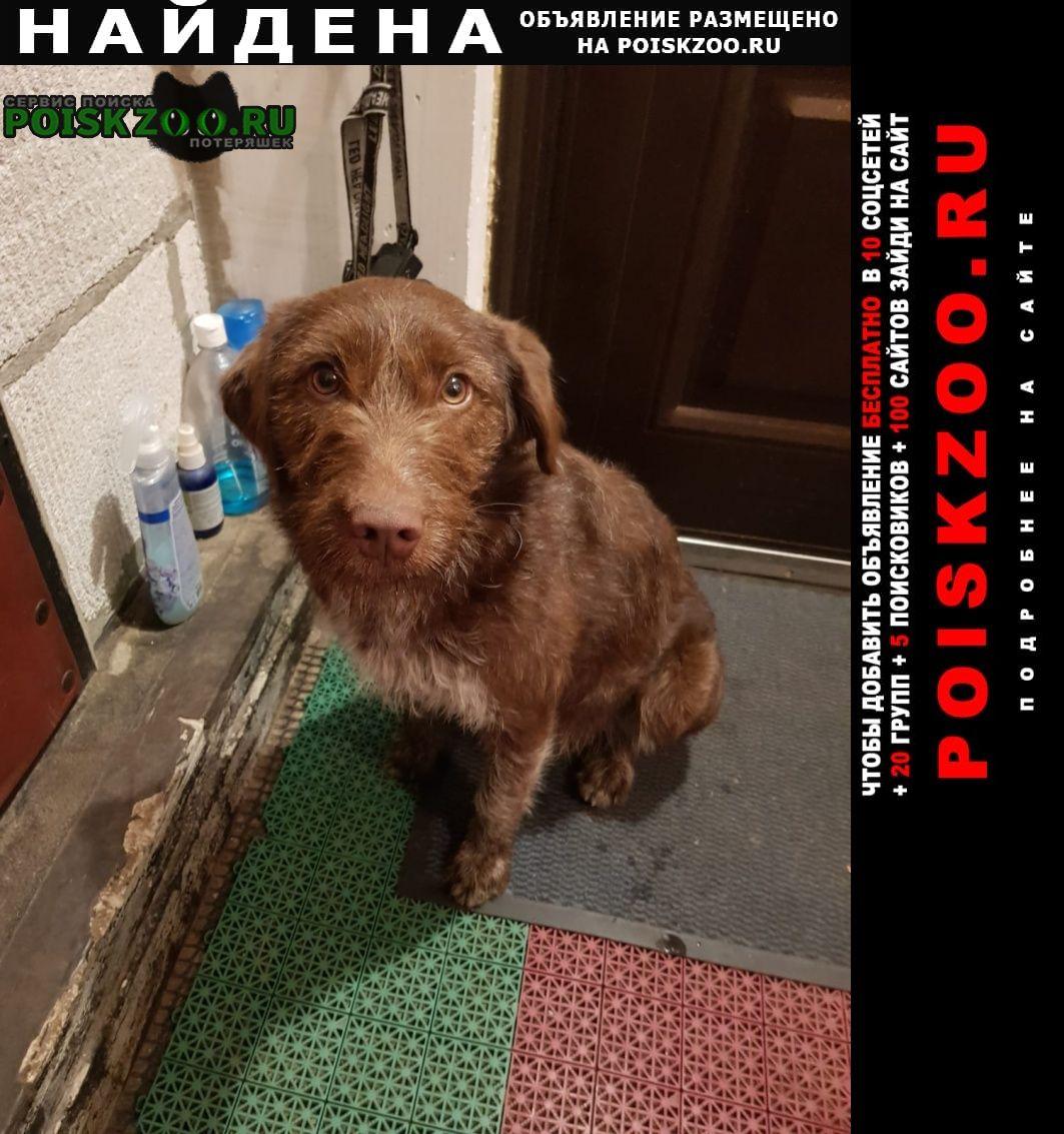 Найдена собака охотничья молодая Витебск