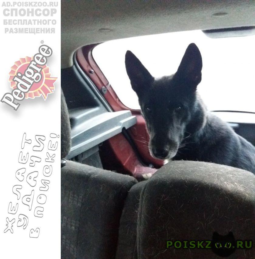 Найдена собака кобель г.Москва