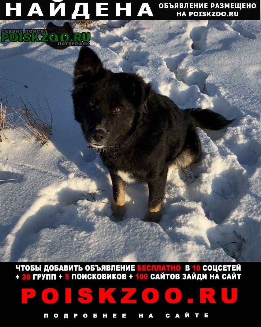 Найдена собака чёрный кобель в коричневом ошейнике Малаховка