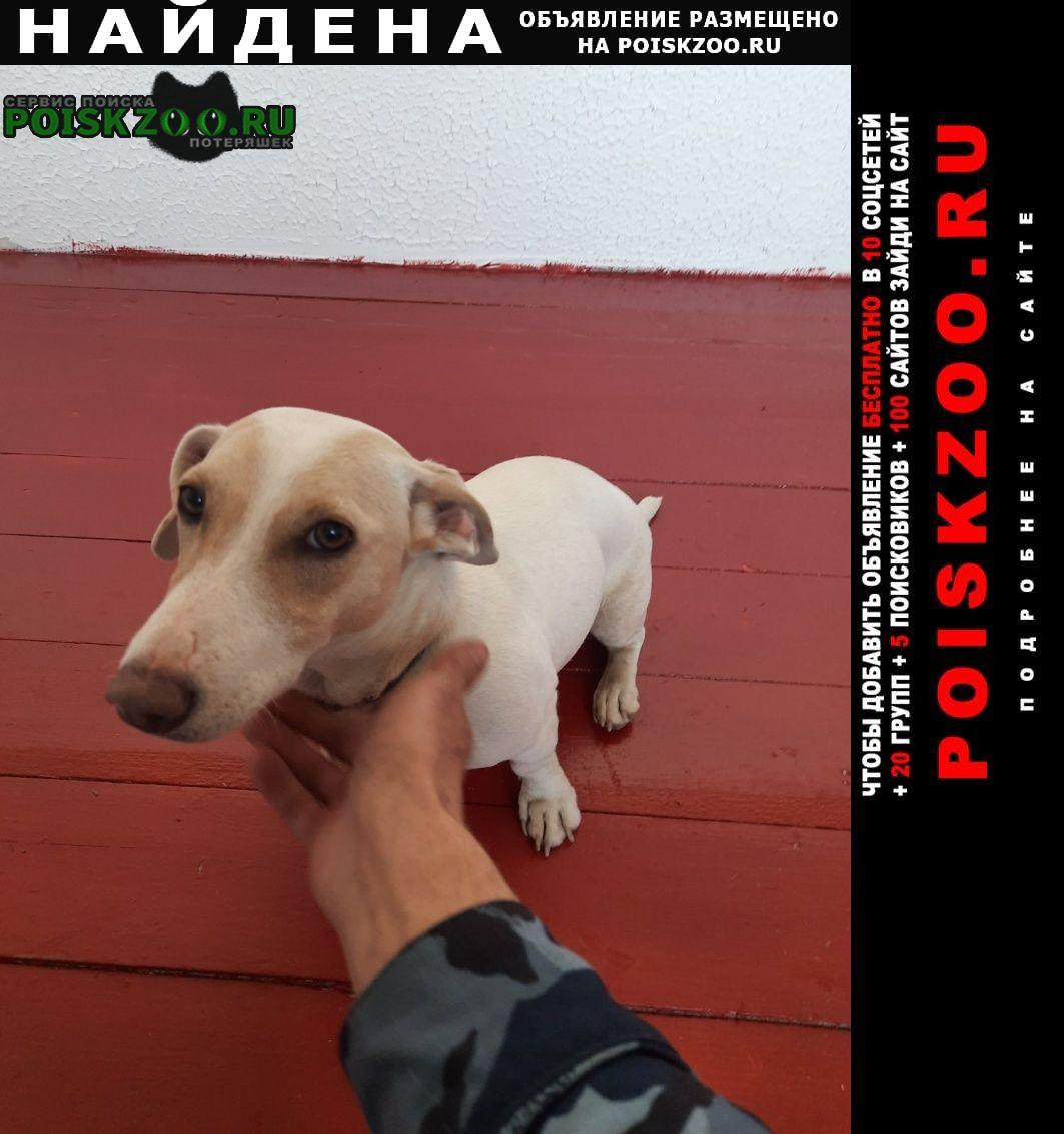 Найдена собака Пермь
