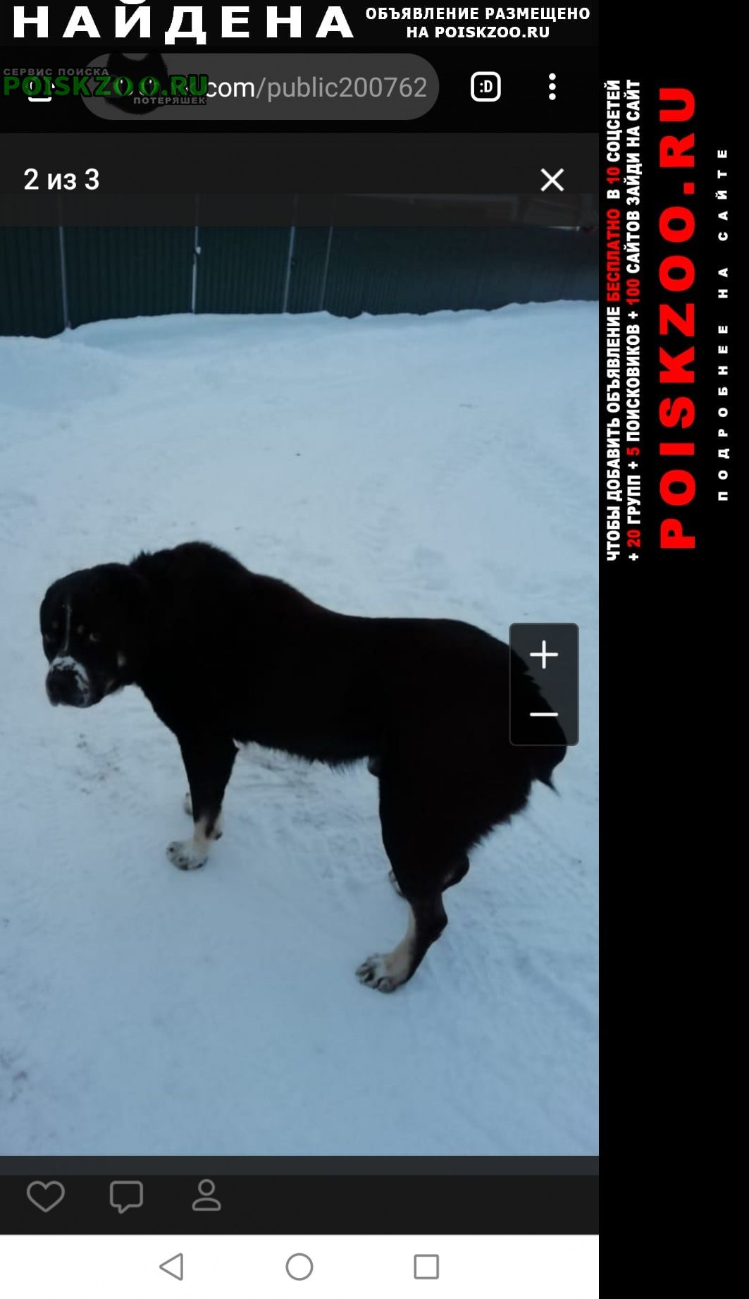 Найдена собака кобель верный алабай ищет хозяина Вороново