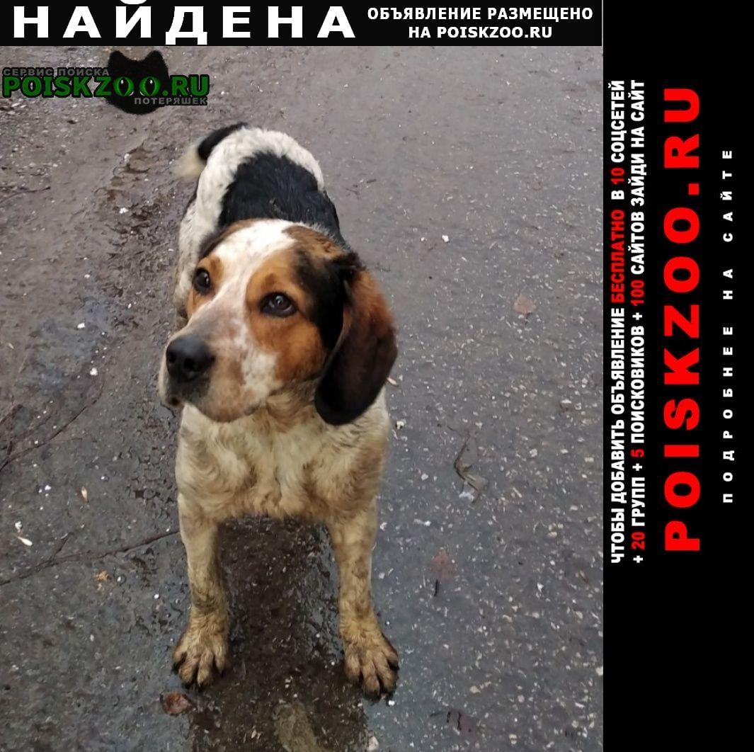 Найдена собака кобель нижегородская область кий район Городец