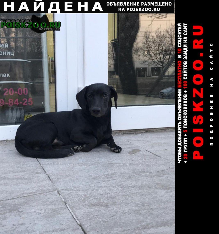 Найдена собака кобель по ул. бульвар победы 25 Воронеж