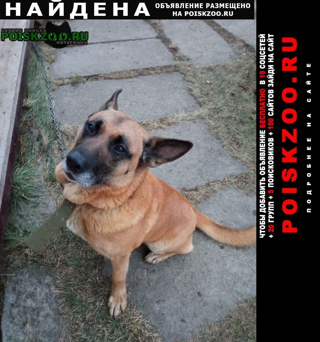 Найдена собака кобель метис бельгийской овчарки Екатеринбург
