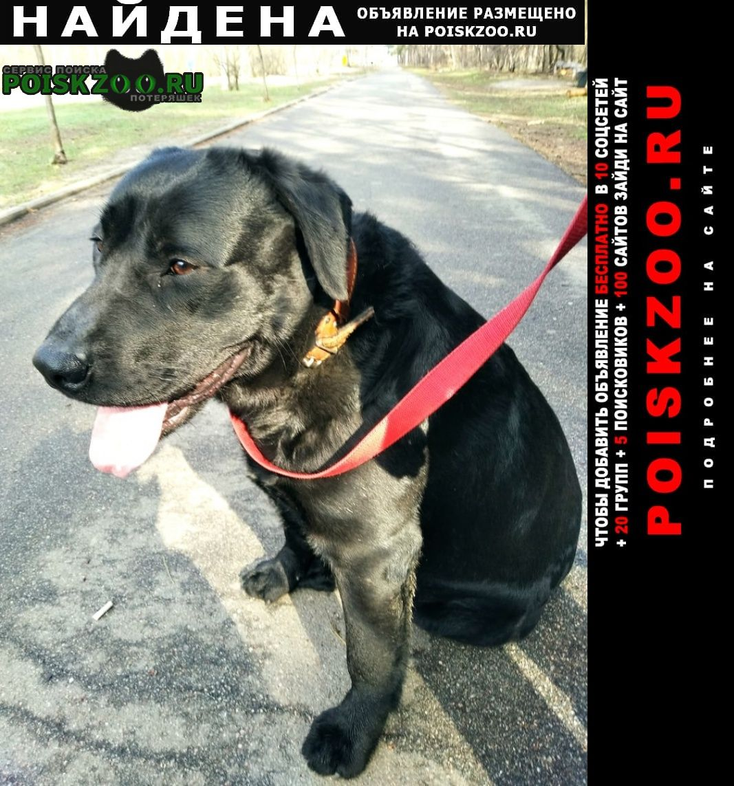 Найдена собака кобель лабрадор, окрас чёрный, мальчик. Воронеж