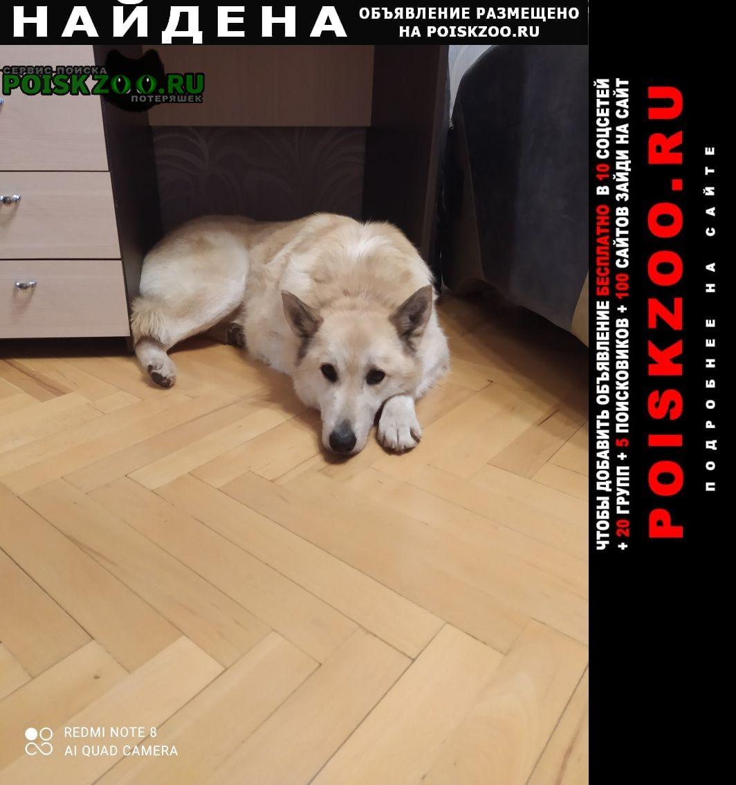 Найдена собака кобель, возможно лайка или помесь Москва