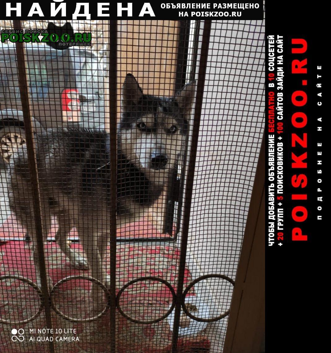 Найдена собака кобель Красноярск