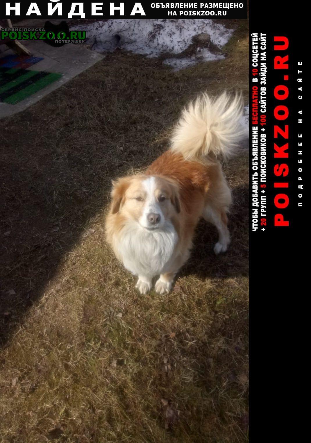 Найдена собака кобель кабель, без ошейника Пушкино