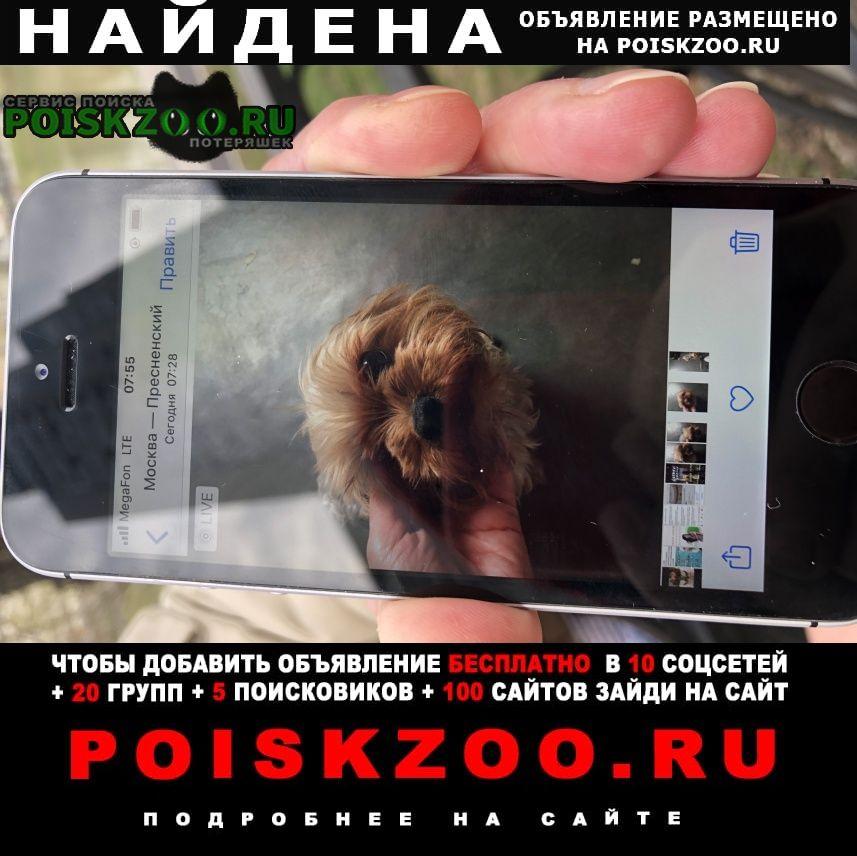 Найдена собака кобель йоркширский терьер Москва