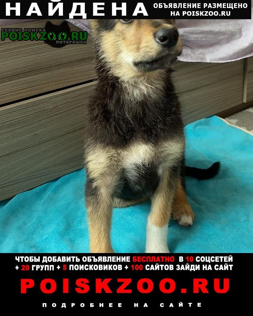 Найдена собака девочка, месяца 4-5 мес. Челябинск