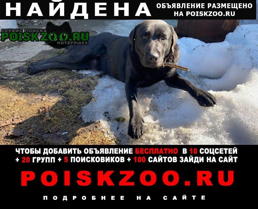 Найдена собака кобель Бор