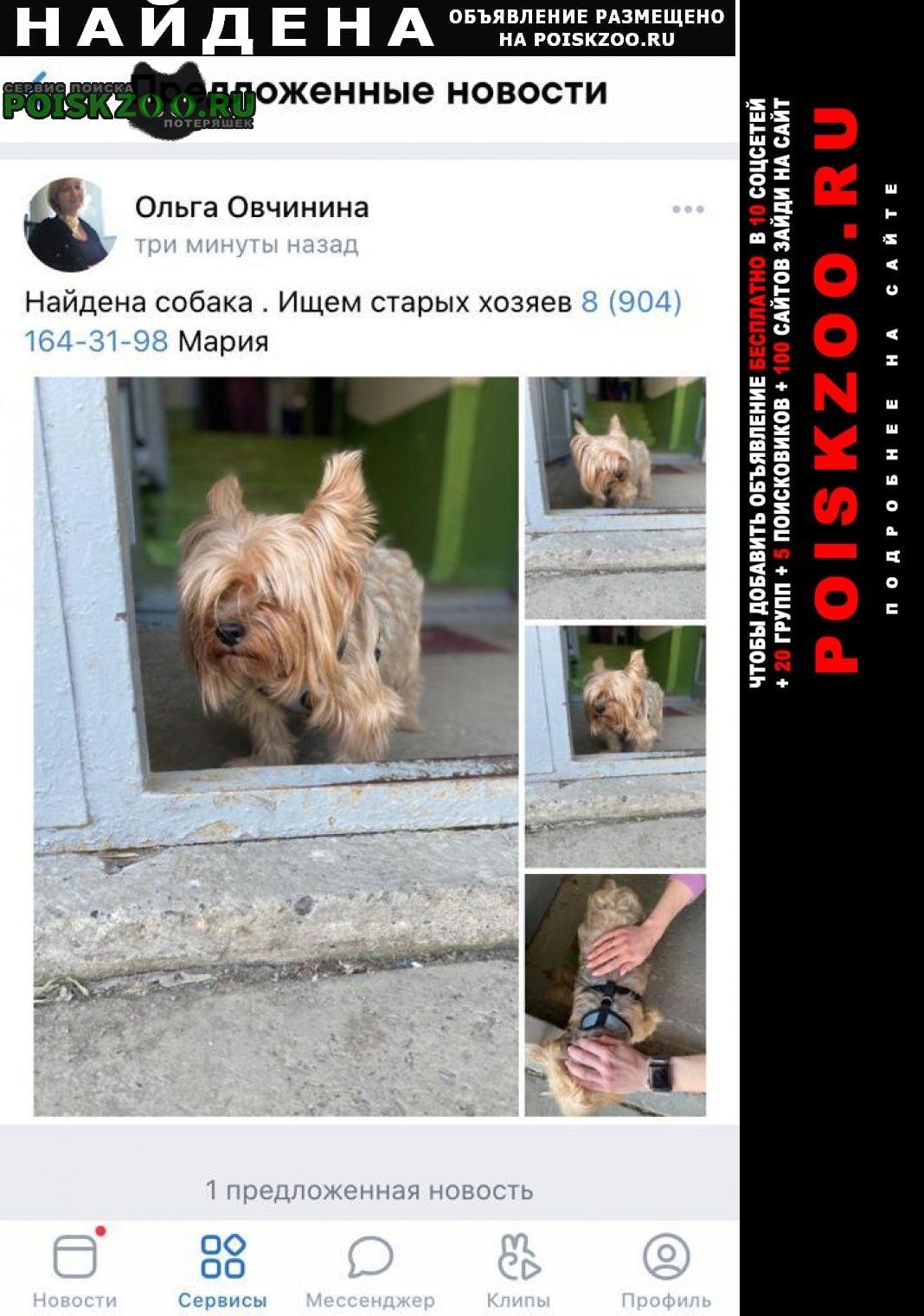 Найдена собака кобель ищем хозяев Первоуральск
