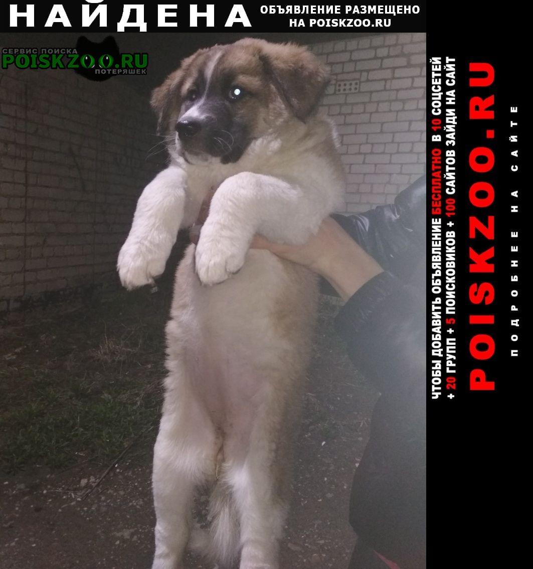 Найдена собака щенок девочка Орел