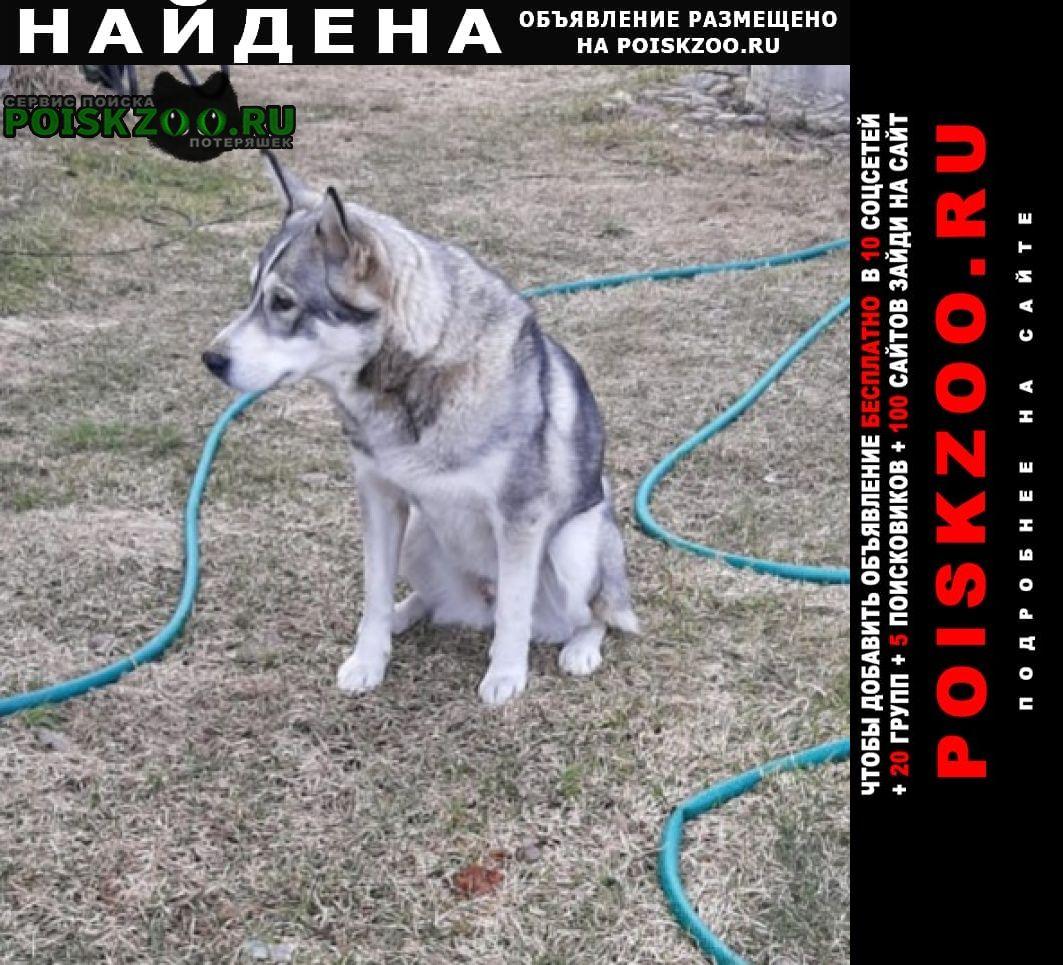Найдена собака Киржач