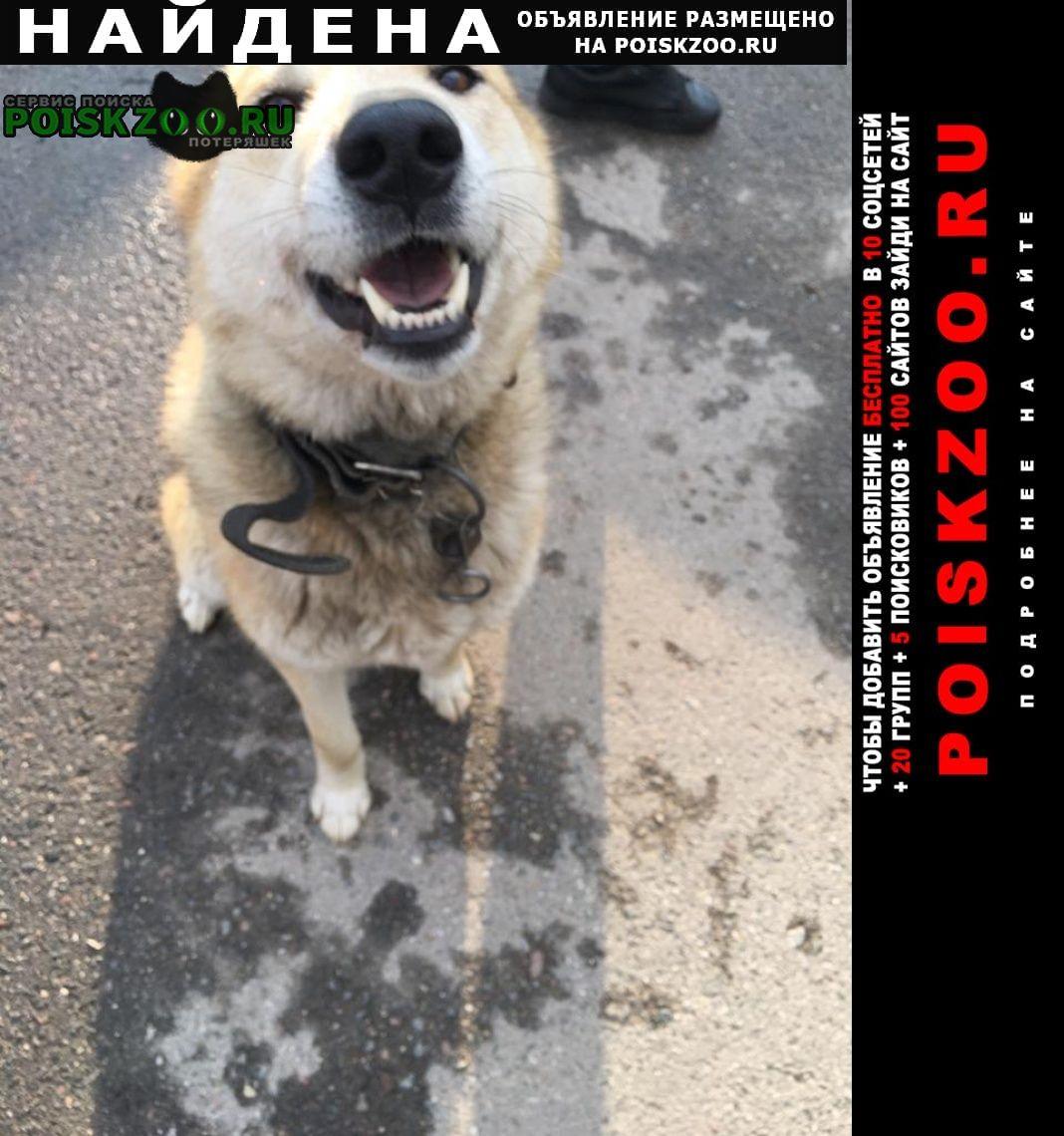 Найдена собака кобель д. аносино кп экоэстейт Истра