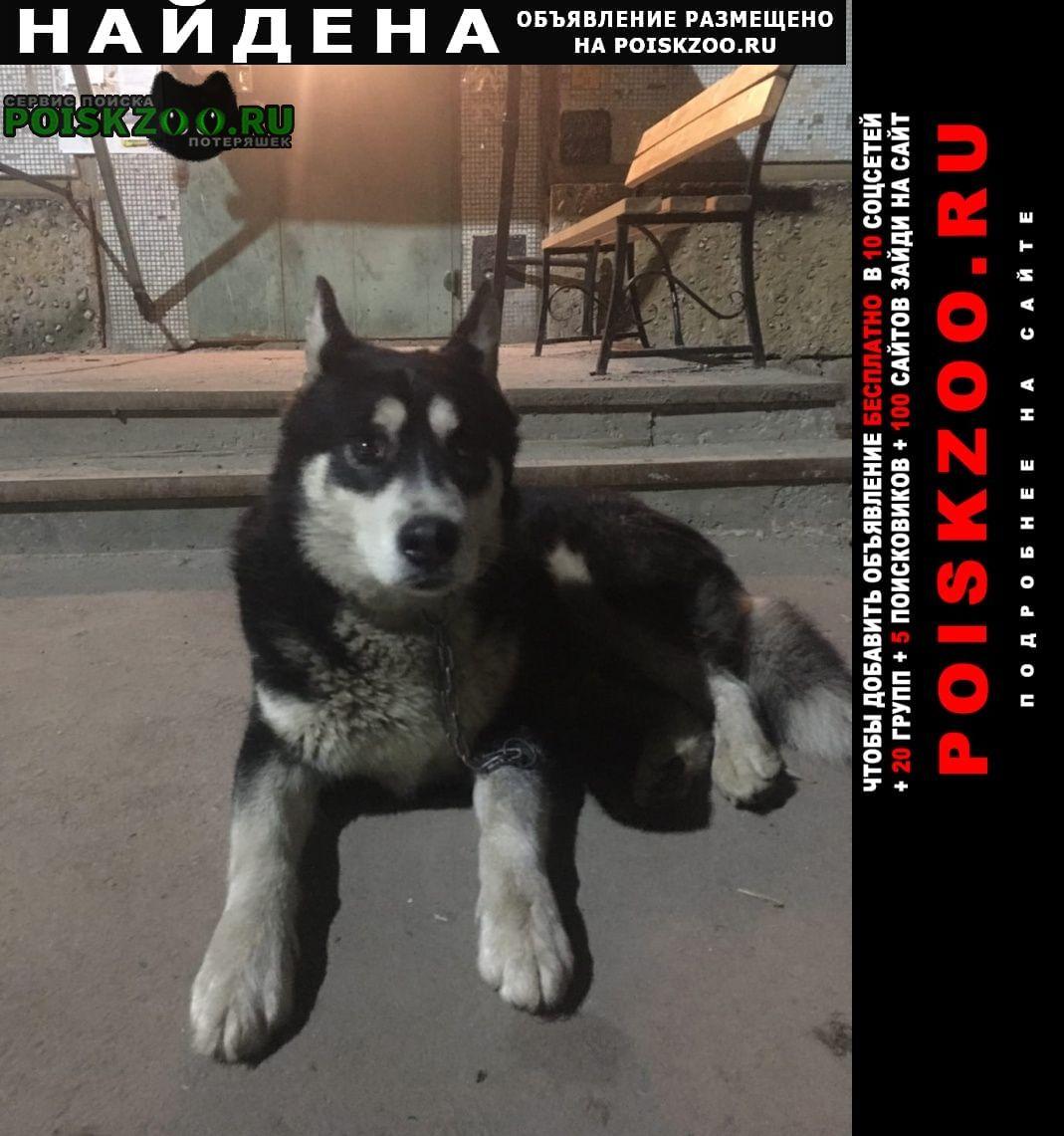 Найдена собака кобель хаски Тула