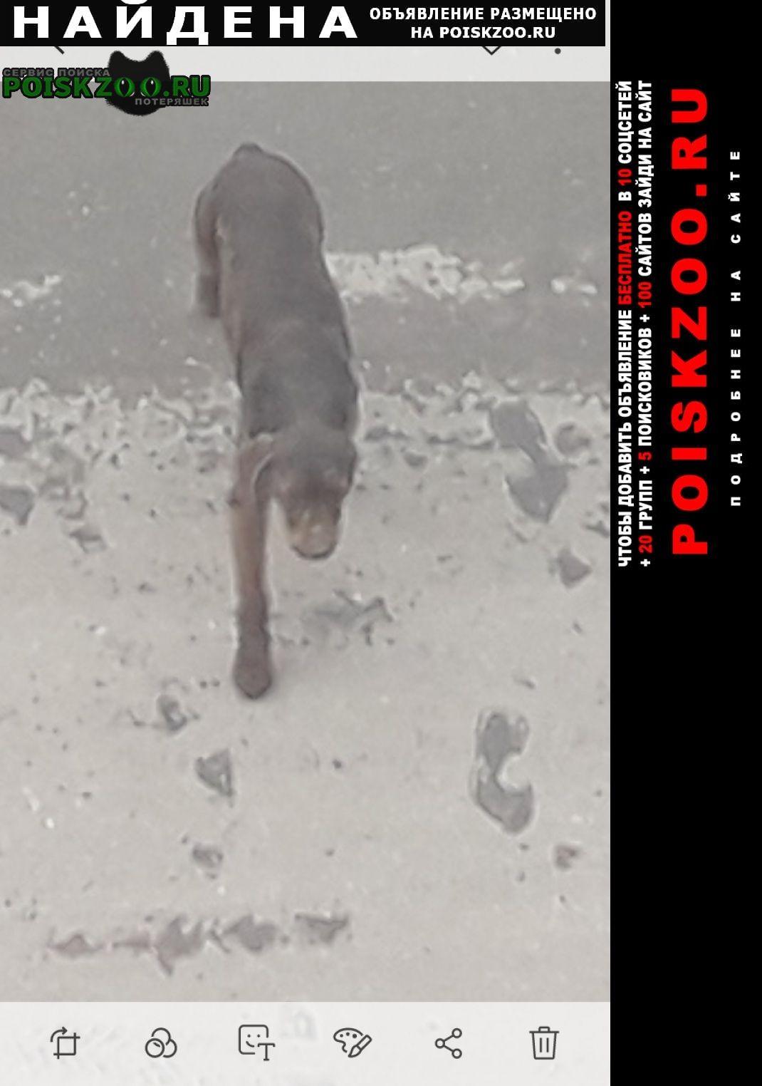 Найдена собака Усмань