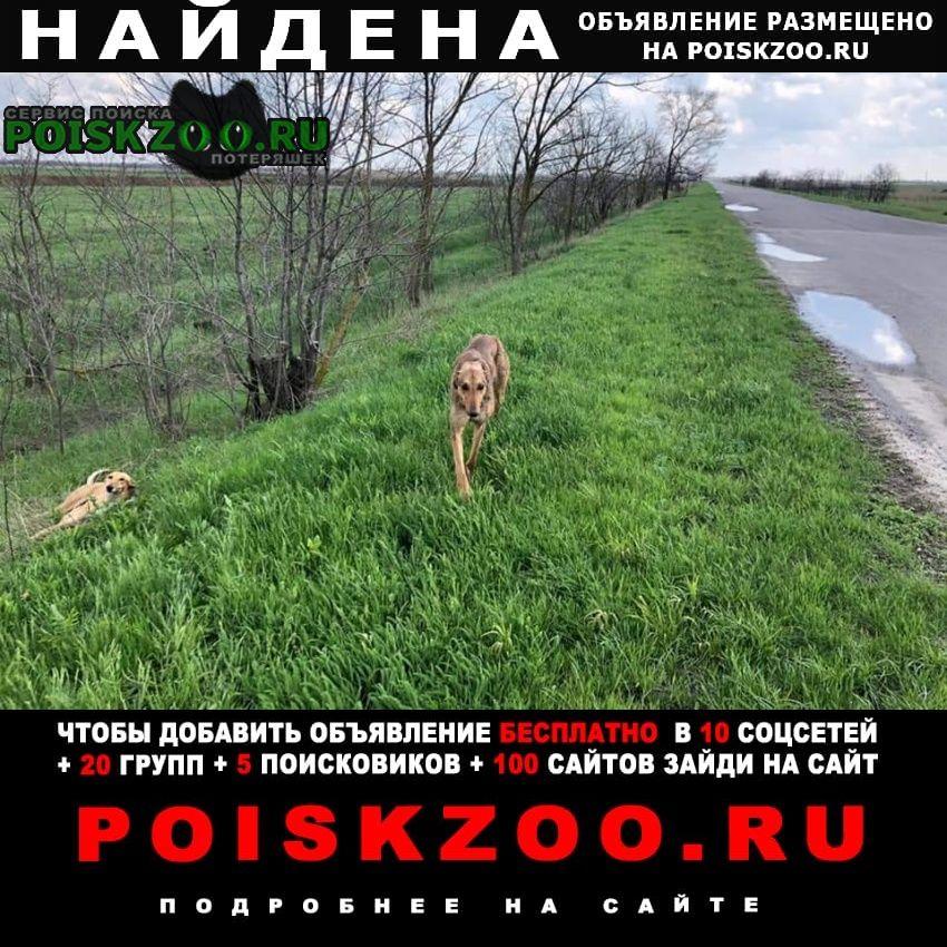 Найдена собака Семикаракорск