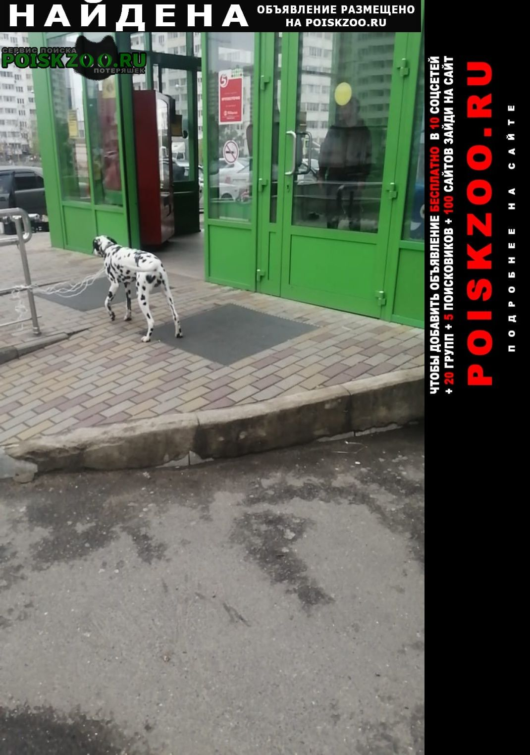 Найдена собака черкасская 72/1 Краснодар