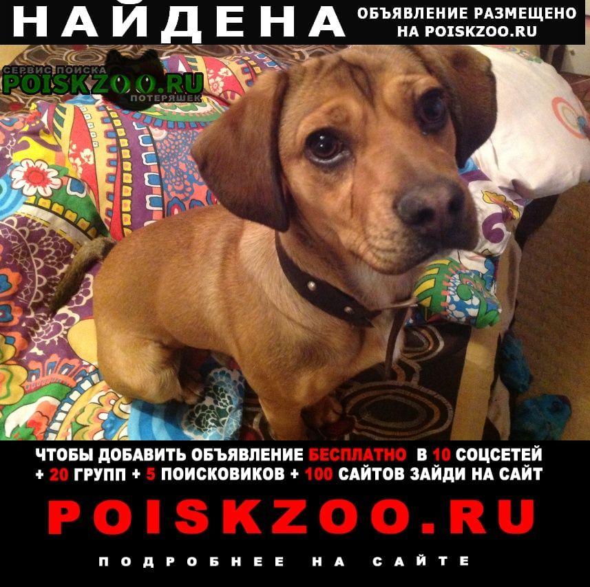 Найдена собака кобель прибился мальчишка 26 апреля в районе сп Белгород