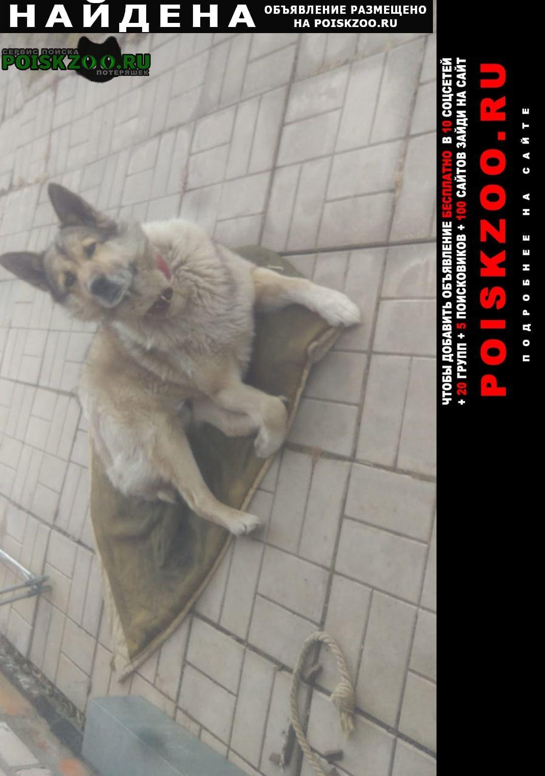 Найдена собака кобель лайка или подобная Кашин