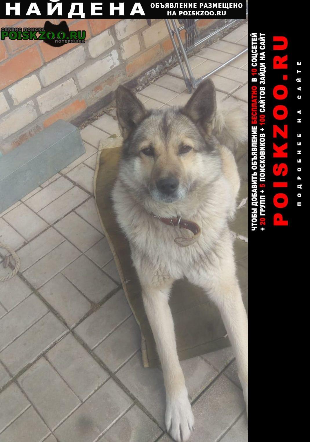 Найдена собака кобель Калязин