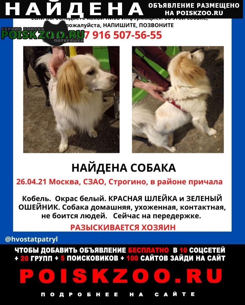 Найдена собака похож на спаниеля Москва