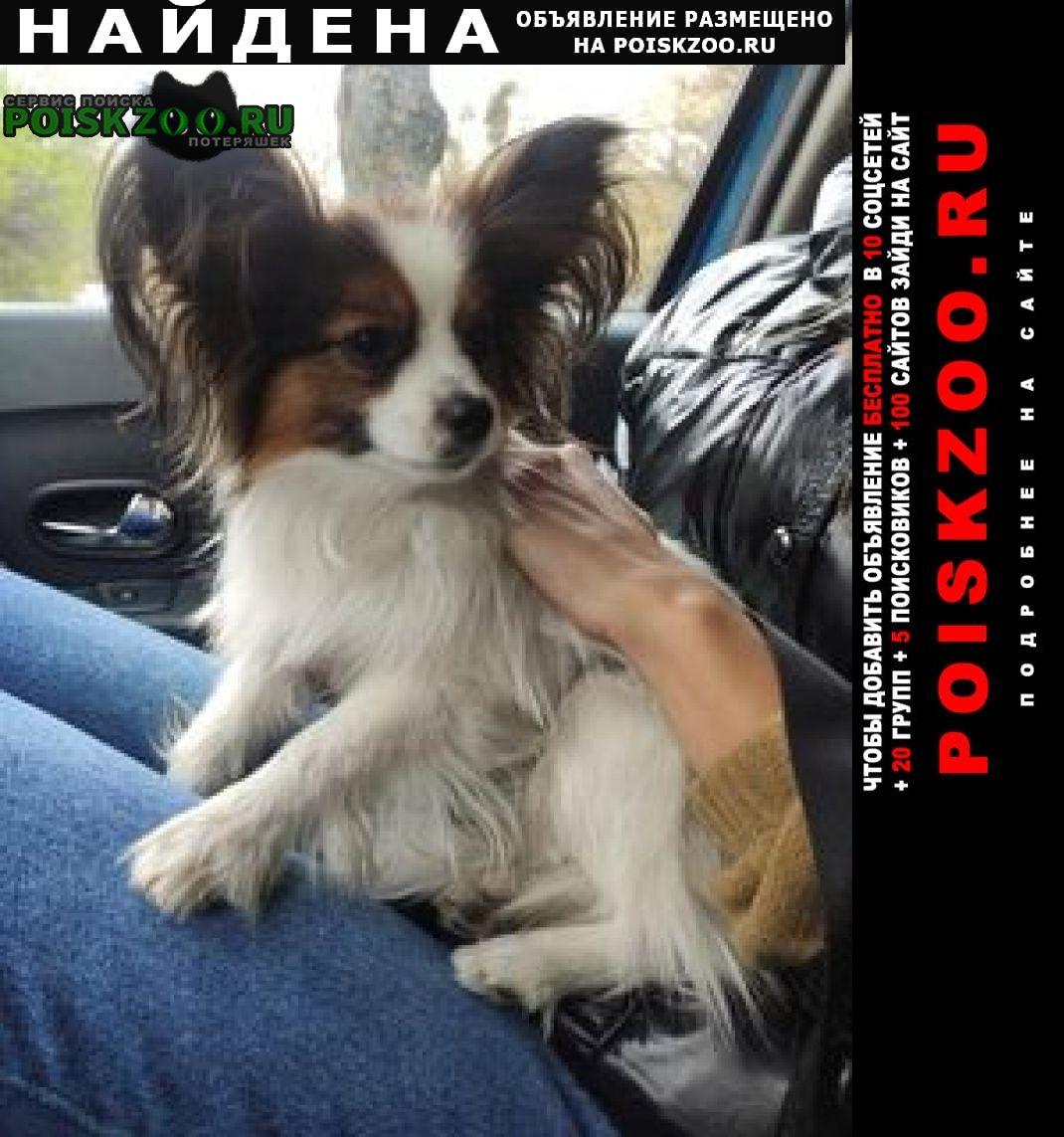 Найдена собака Киев