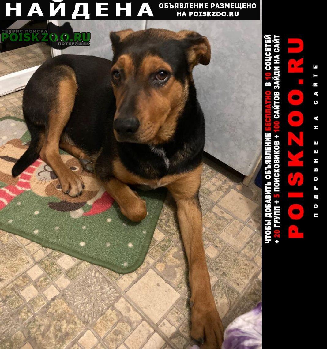 Найдена собака умная девочка Новороссийск