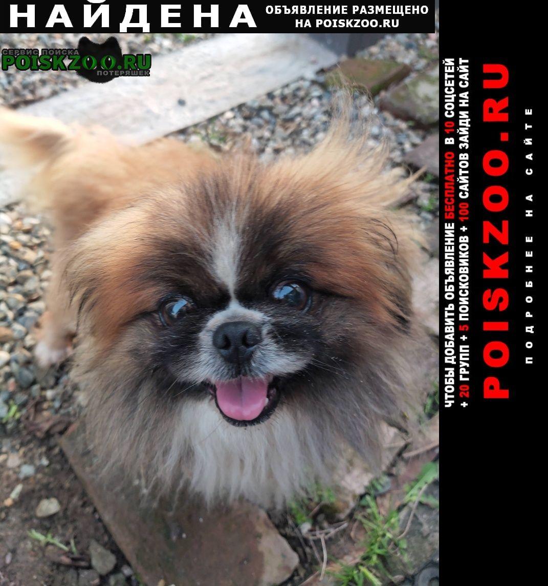 Найдена собака кобель пос.сенной Темрюк