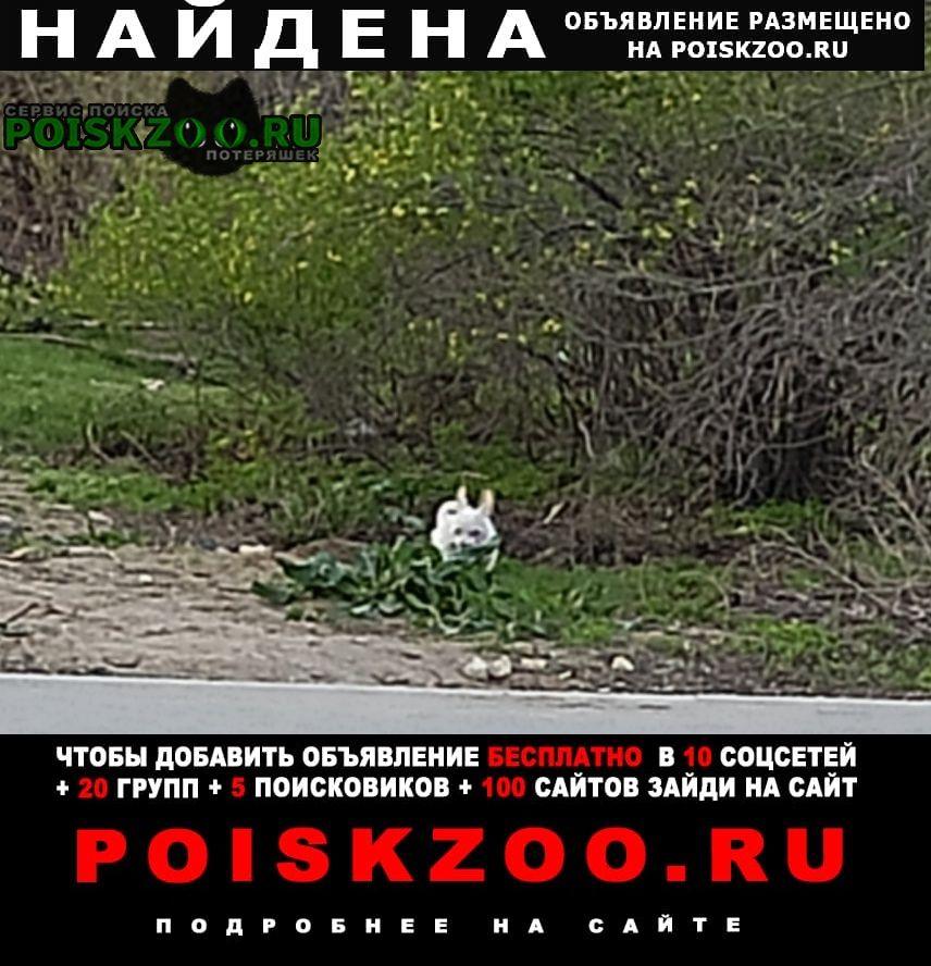 Найдена собака кобель чей малыш? Волгоград