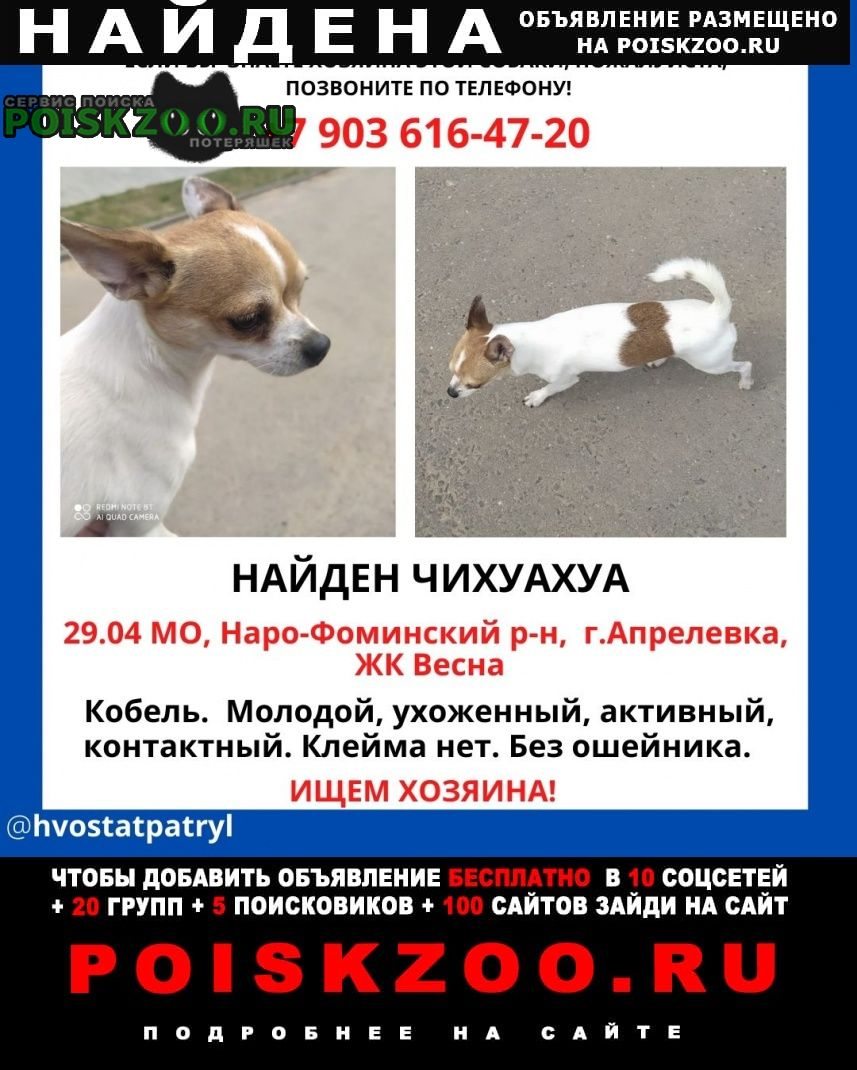 Найдена собака кобель Апрелевка